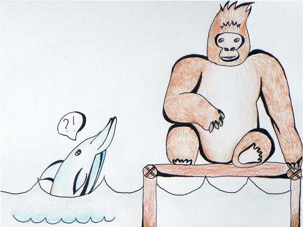 Kaip gorila išmoko nardyti